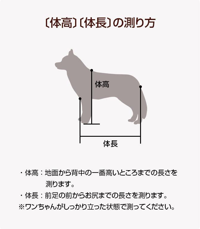 体高体長の測り方